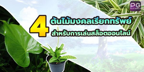 4-ต้นไม้มงคลเรียกทรัพย์